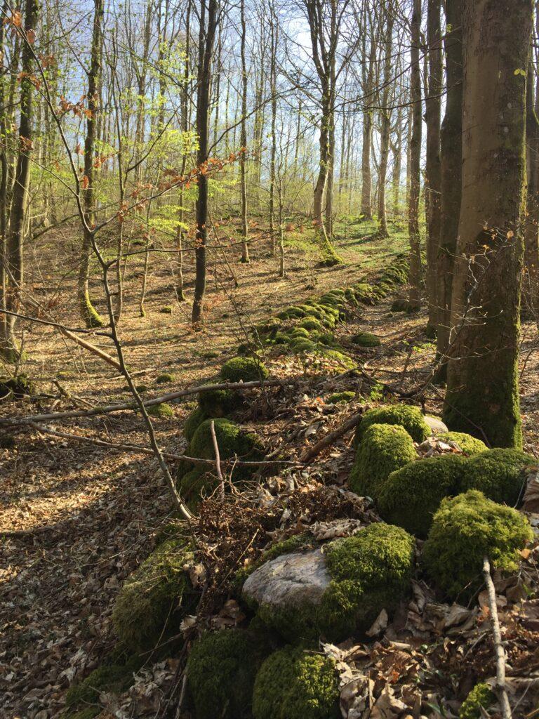 Dansk skov